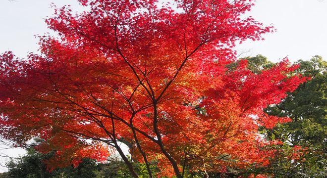 熊本県の紅葉スポット