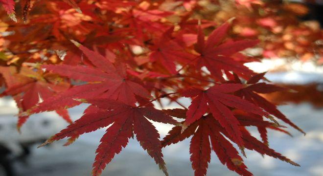宮崎県の紅葉スポット