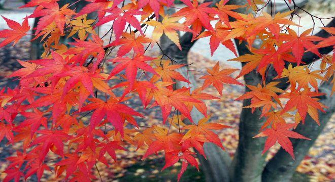 鹿児島県の紅葉スポット