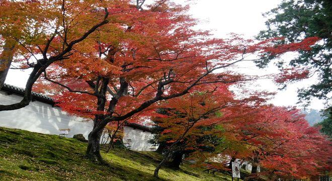 九州の紅葉スポット