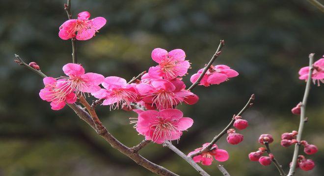 四国の梅の名所