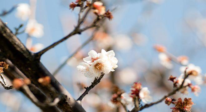 福岡県の梅の名所