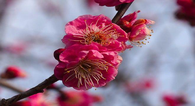 佐賀県の梅の名所