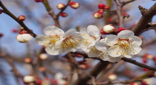 長崎県の梅の名所