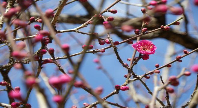 九州の梅の名所