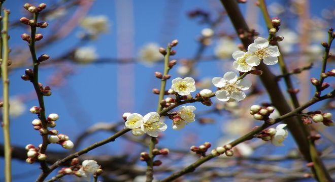 徳島県の梅の名所