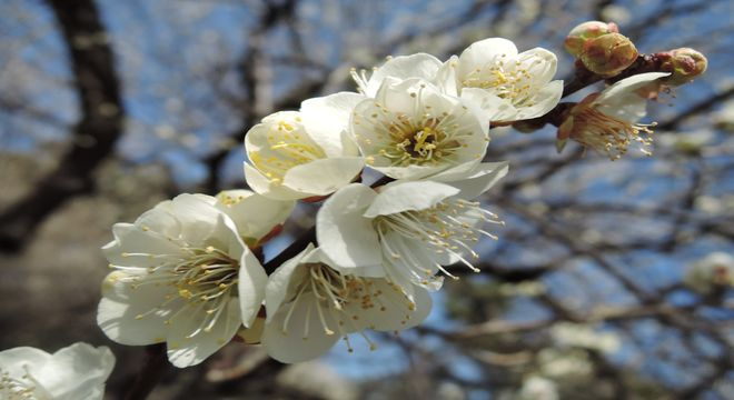 香川県の梅の名所