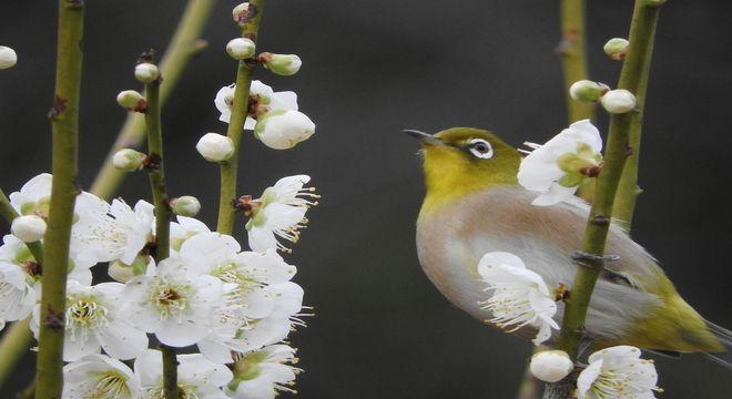 愛媛県の梅の名所