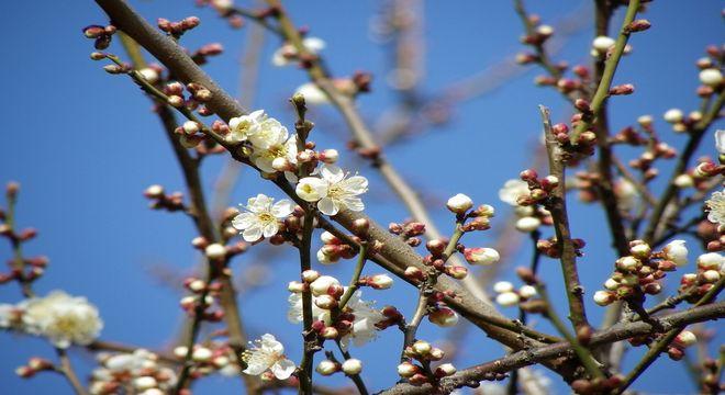 鳥取県の梅の名所