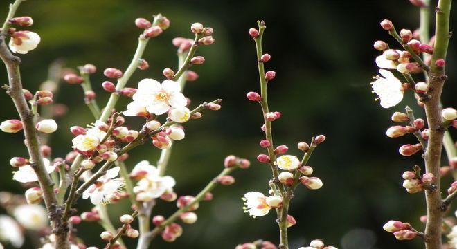 山梨県の梅の名所