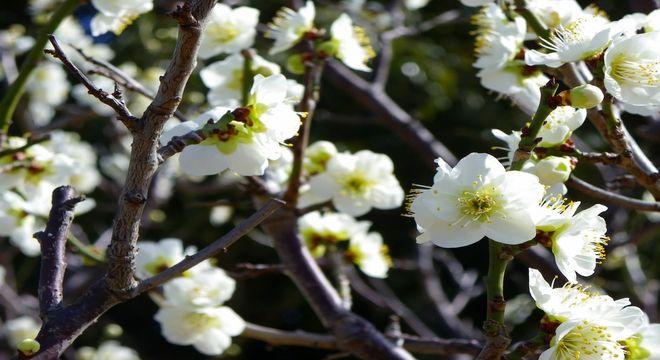 賀県の梅の名所