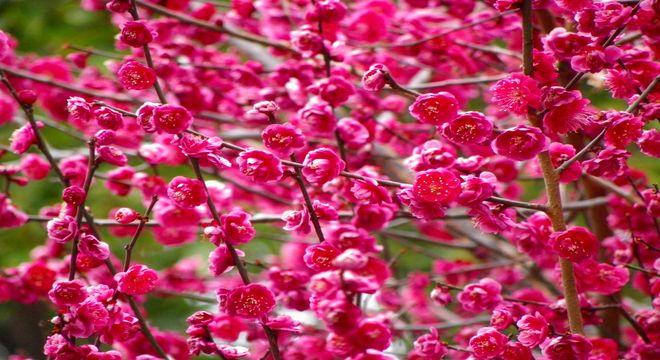 京都府の梅の名所