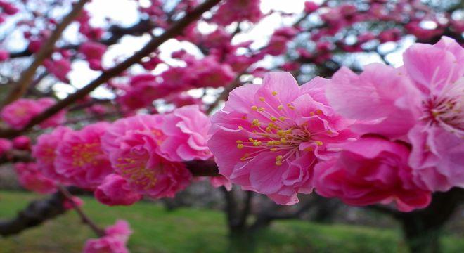 奈良県の梅の名所