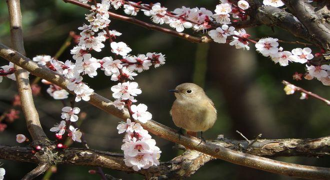 静岡県の梅の名所