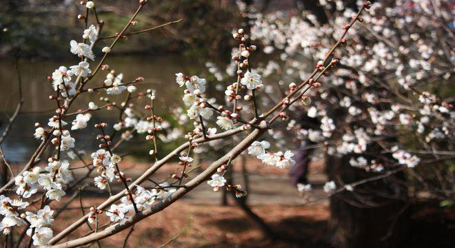 岐阜県の梅の名所