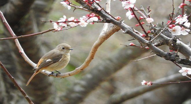 三重県の梅の名所
