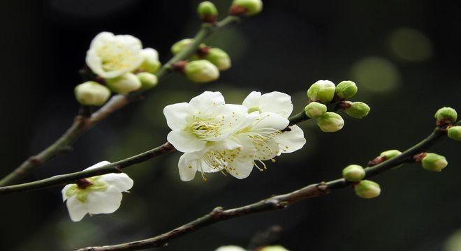 青森県の梅の名所