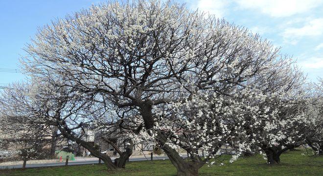 福島県の梅の名所