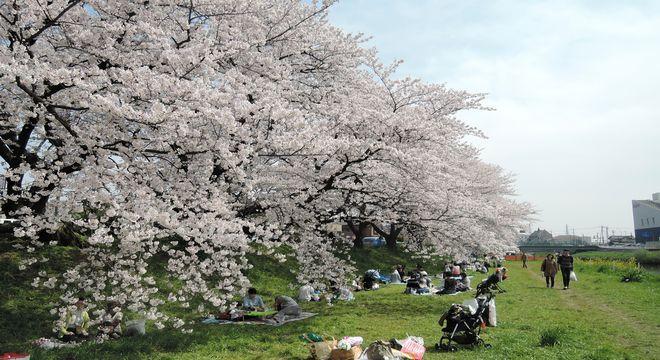 越谷の桜名所