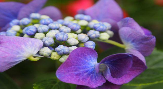 千葉県 紫陽花 名所