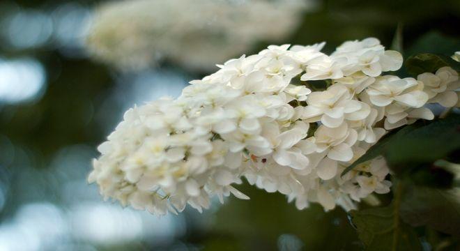 栃木県 紫陽花 名所