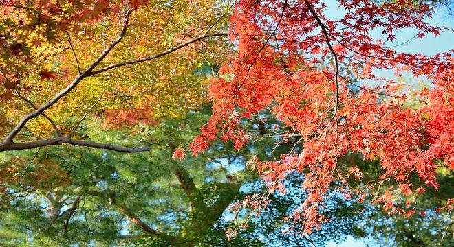 神奈川県の紅葉名所