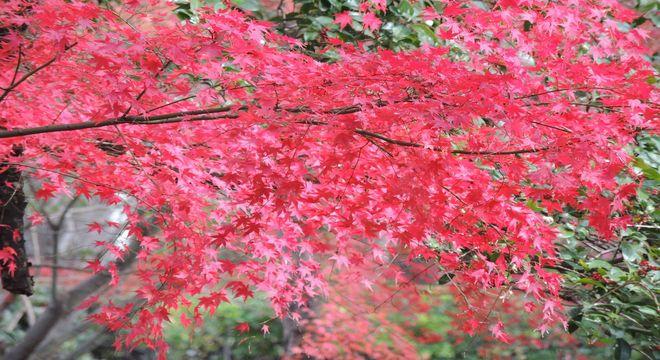 兵庫県の紅葉名所