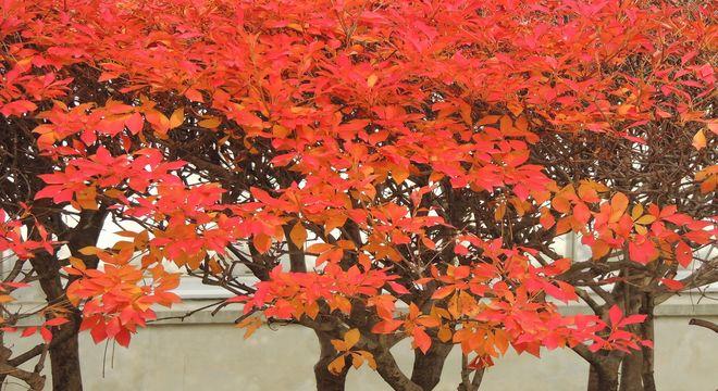 歌山県の紅葉名所