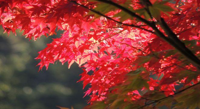 岡山県の紅葉名所