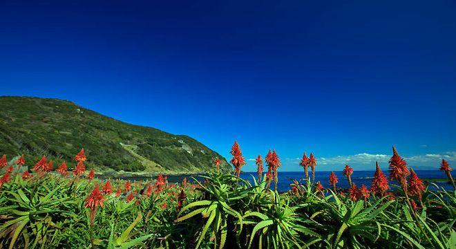 アロエの花まつり