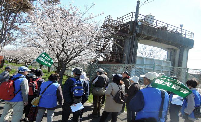 観光ぷらっとこしがや~新方地区の歴史と桜