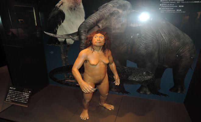 人類の祖先