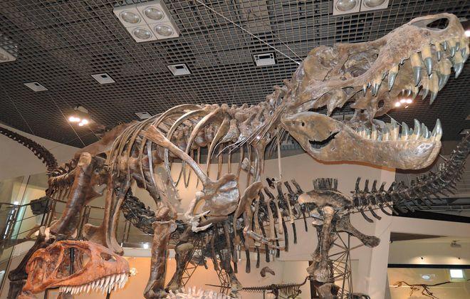 ティラノサウルスの骨格模型