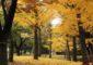 11月の季語と手紙の挨拶文<書き出しと結びの言葉・はがき文例>